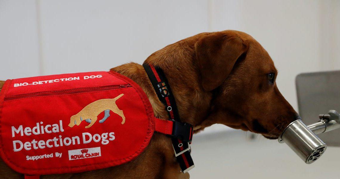 Perros por el mundo apoyando la batalla contra la COVID-19